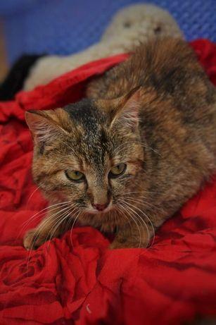 Отдам котёнка лесного окраса , девочка ,7 месяцев, стерилизована