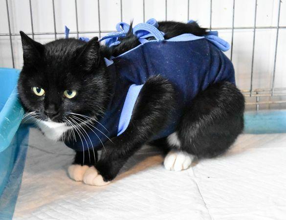Lidka - koteczka bardzo elegancka :)
