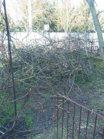 Oddam drzewo na opał