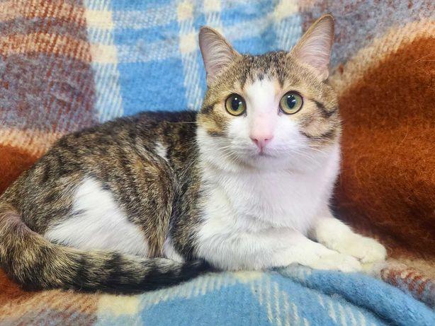 Генрі - забавний молодий котик.6 міс. Стерилізований. Кіт.
