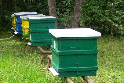 Ule wielokorpusowe / pszczoły