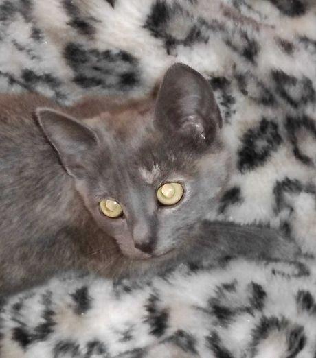 Потеряшка котенок девочка ищет нового или старого хозяина