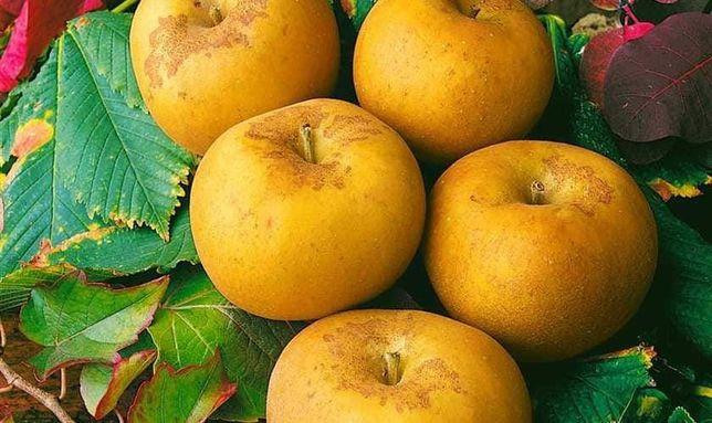Яблоко со вкусом ананаса и запахом цветов