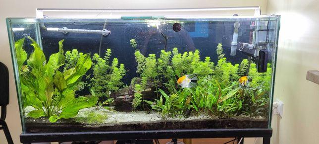 akwarium 240L ze stelażem+ życie