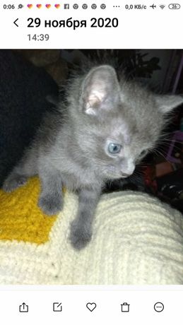 Котята милые пушистинькие