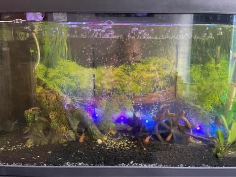Aquario Aquatlantis mais acessórios