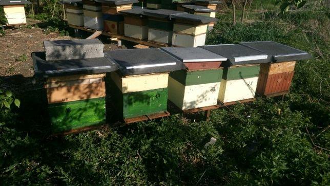 Odkłady pszczele na ramce wielkopolskiej