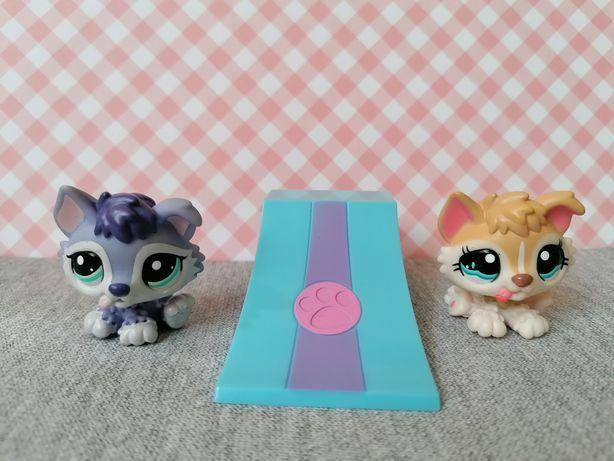 Littlest pet shop lps zestaw dwóch piesków husky