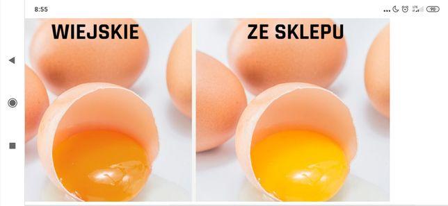 Jajka  0,70  Lębork
