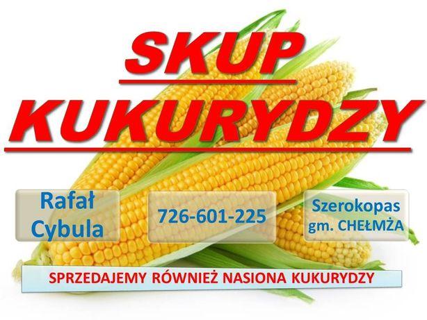 Skup kukurydzy, suszenie kukurydzy, mokra kukurydza, nasiona kukurydzy