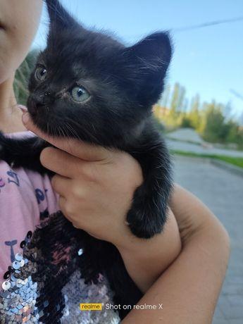 Прилаштовується котик хлопчик.1місяць.Буле пухнастим з зеленими очима