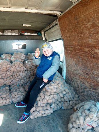 Ziemniaki catania super smak bez rdzy