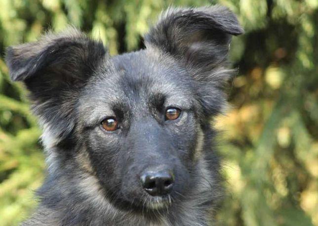 Пушистая ласковая собака Мила, послушная, небольшая 10 кг, до 1 г