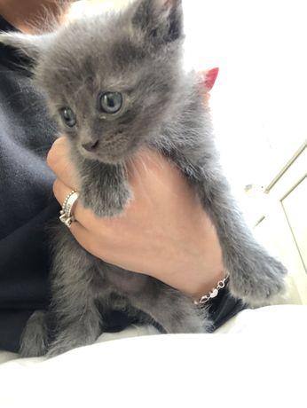 Котики в добрі руки) дітям до 18 років без згоди батьків не дам )