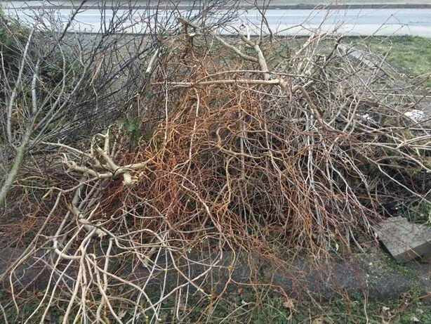 Gałęzie za darmo