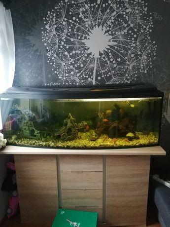 Akwarium panoramiczne 150x40x50