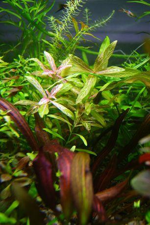 Zestaw roślin łatwych w uprawie