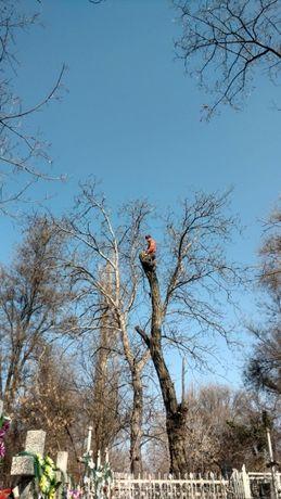Спил деревьев. Удаление деревьев. Корчевание