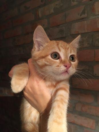Котёнок 2мес в добрые руки