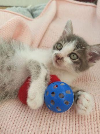 Котёнок, котята, котики, кот в добрые руки
