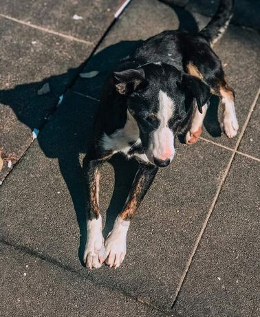 Prada- cachorro de porte pequeno/ médio para adoção