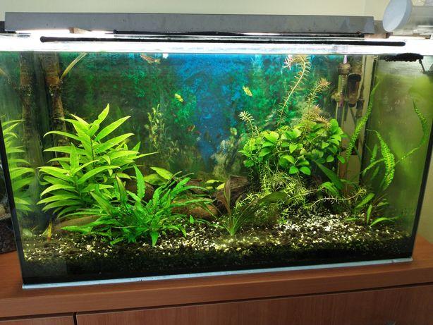 Akwarium zestaw CO2 lampa UV