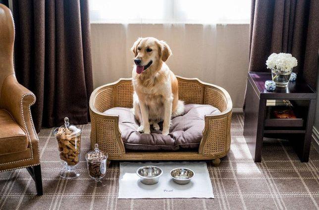 Отель для собак и кошек , передержка
