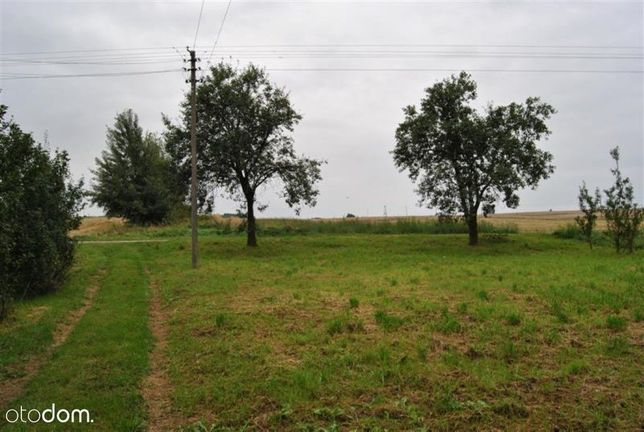 Siedlisko w Woli Wydrzyna