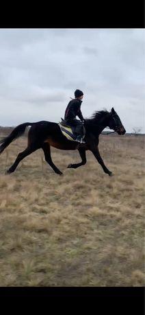 Лошадь+жеребенок1,5 года+сбруя.