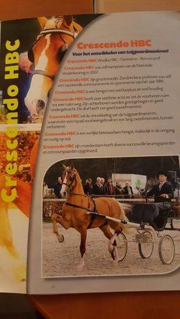 KWPN klacze klacz kon konie