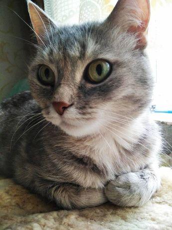 Кошка-полосатик по имени Джесси