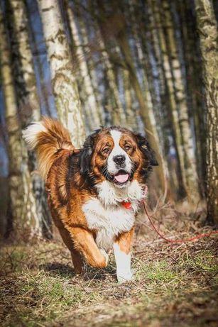 Cudowny pies z ogromnym sercem! Adoptuj prawdziwego przyjaciela