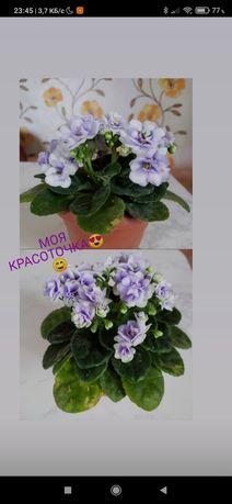 Кімнатні квіти ...