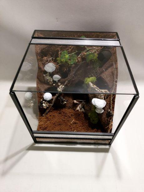 Terrarium AquaWaves nr.kat.TW08TP (ślimak żółw pająk wąż gekon)