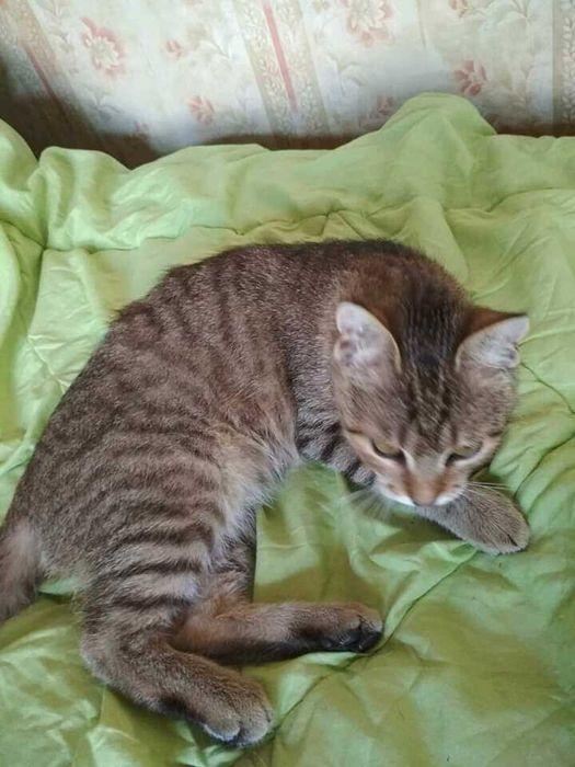 Потерялся кот Бобрик - изображение 1