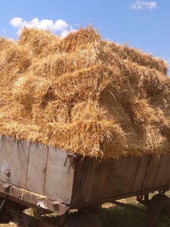 Солома пшеницы .