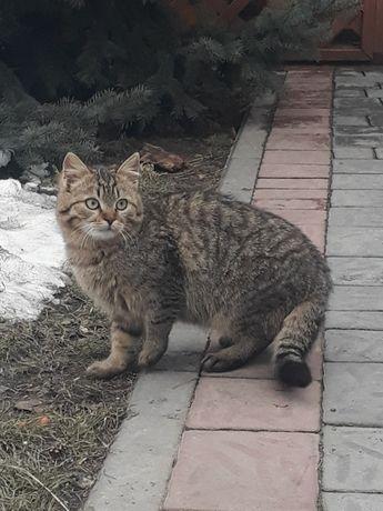 Віддамо котиків турботливим людям