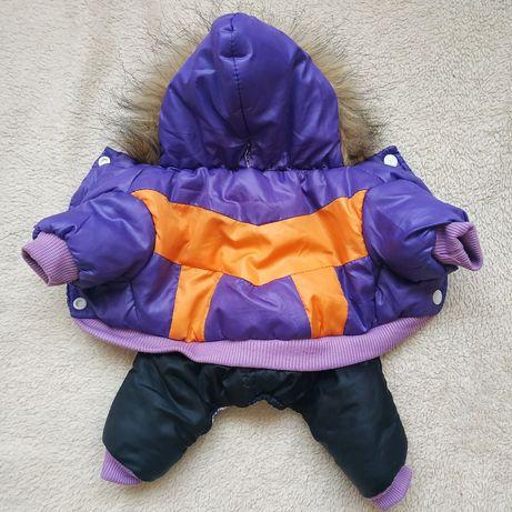 Комбинезон и курточка на маленькую собачку