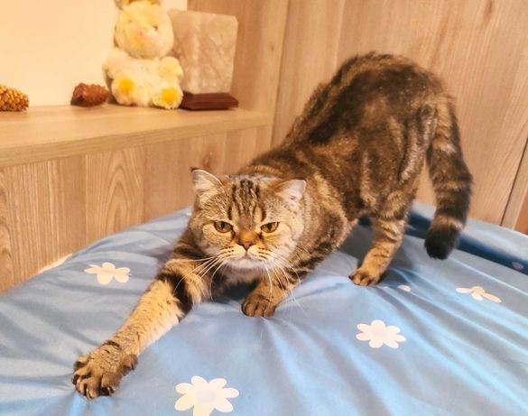 Сабрина, 1 год, чудо-кошечка ищет дом, кошка в добрые руки!