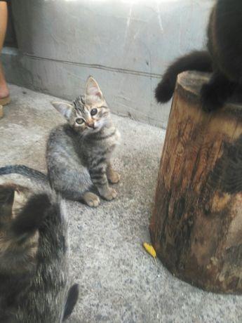 Котята даром в добрые руки