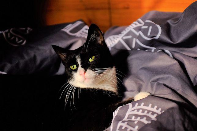 Отдам черно-белую кошку в хорошие руки