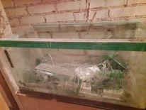 Akwarium o pojemności 153 litrów, dł. 85cm, szer. 40cm, wys. 45cm