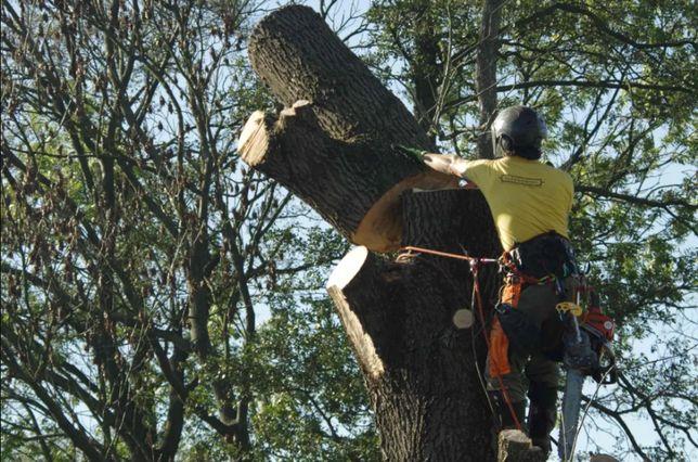 Profesjonalna pielęgnacja drzew [wycinanie / wycinka, podcinanie itp.]