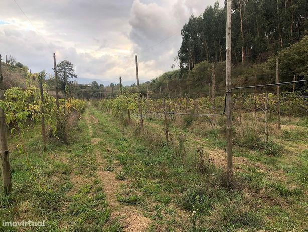 Terreno em Baião ( Grilo)sem CUSTO COM ÁGUA   com quase 3 Hectares par
