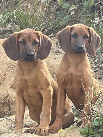 Cachorrinhos lindos
