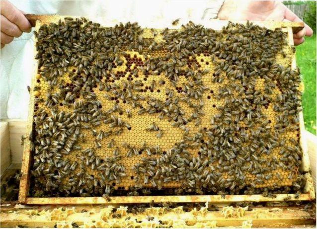 """Карпатская Бджола Проверенные 2021 г. (Пчелопакеты) 4+1 """"Пошта"""""""