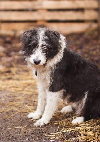 Молоденькая стерилизованная собачка ищет дом