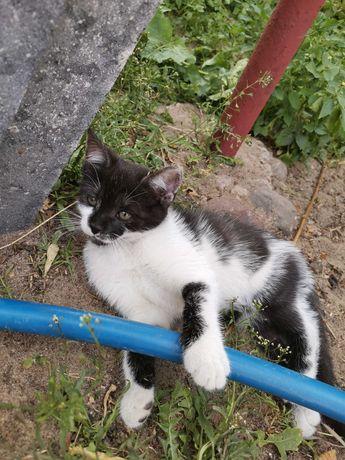Oddam małe kotki w dobre ręce!