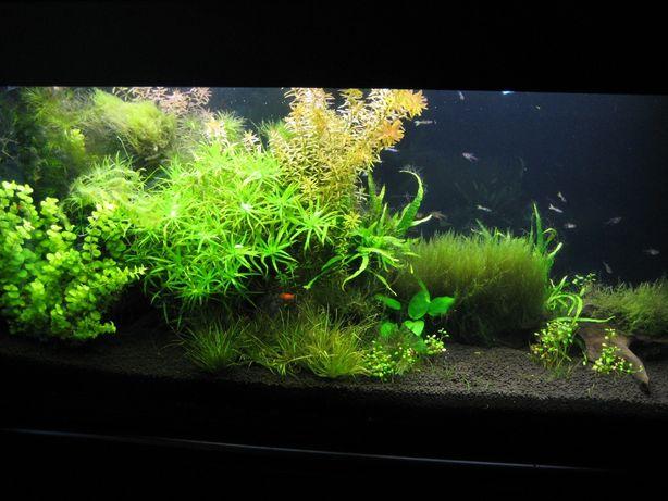 Чистка аквариумов, обслуживание аквариумов, дизайн аквариумов