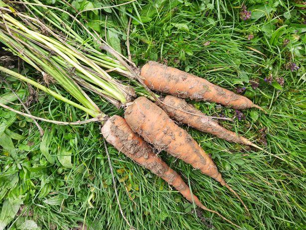 Warzywa ekologiczne bez nawozów
